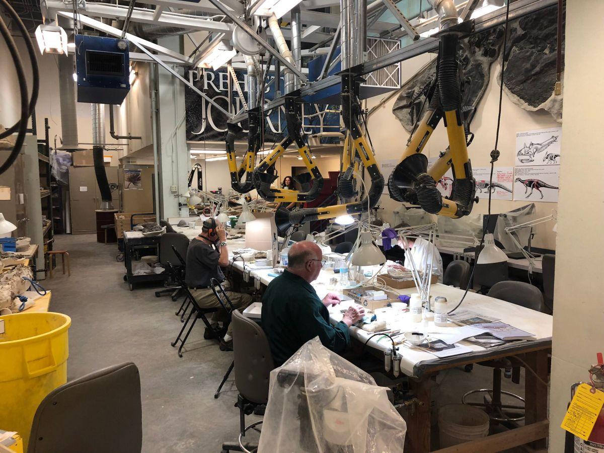 scienziati al lavoro al denver museum of nature and science